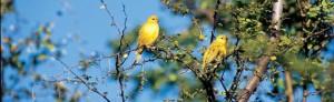 Observación de Aves I