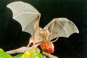 Leyenda mexicana del murciélago