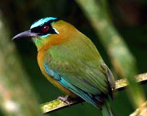 El pájaro dziú, Leyenda Maya