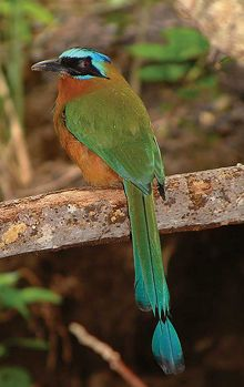 La leyenda del pájaro Dziú
