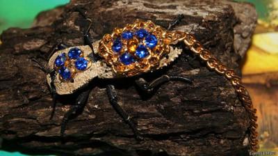 El escarabajo y la princesa