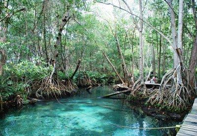 Reserva Ecológica de Celestún